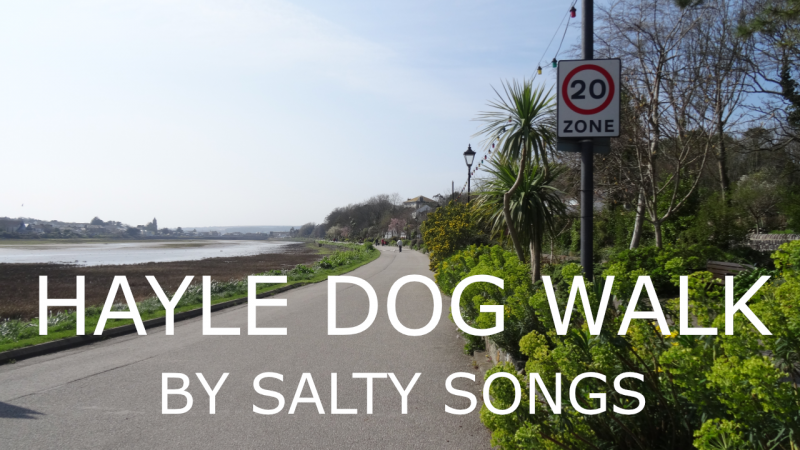 dogs in hayle walk video