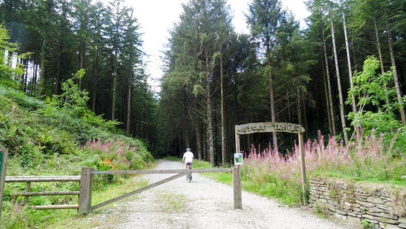 cardinham woods